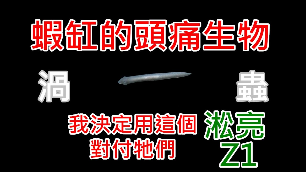 輕鬆除渦蟲 | 藍絲絨被渦蟲攻擊而減少嗎? | 淞亮 Z1 (上) | SL AQUA Aquarium Bio Protector clean planarian and hydra ...