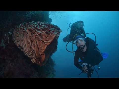 DIVING IN GORONTALO 2017   NORTH SULAWESI