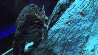 Night Hunters Walk Through - Cincinnati Zoo