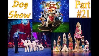 The Dog Show Best in Lahore Dogs show in Lucky Irani Circus Part 21
