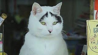 Кошка с бровями приносит удачу в Китае