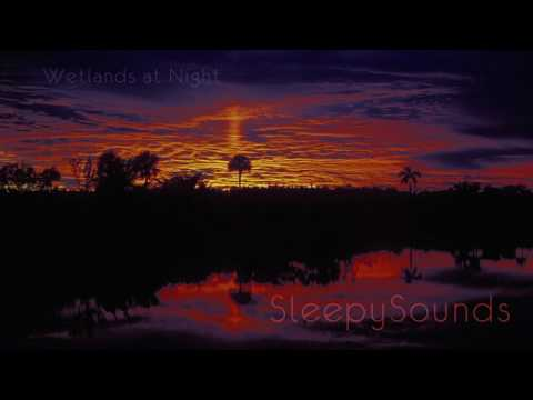 wetlands-at-night-–-9-hours-of-frogs-and-crickets-–-soundscape-for-sleep,-ambience
