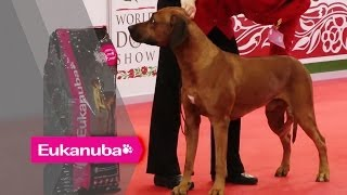 World Dog Show 2013 - Group Vi Judging