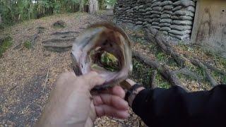 evening frog fishing hillsborough river state park 3 6 17