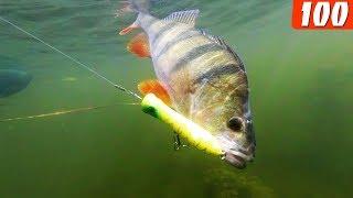 На мелководье эта приманка решает!!! Рыбалка на щуку в августе