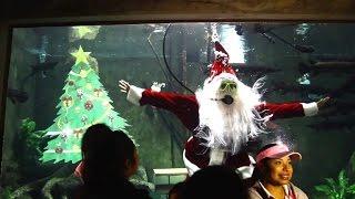 Un Père Noël plongeur dans un aquarium mexicain