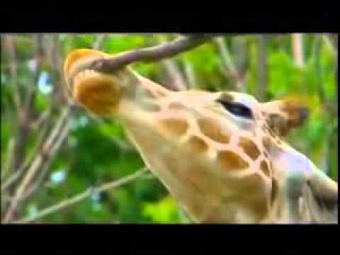 Animal Atlas DVDs Trailer