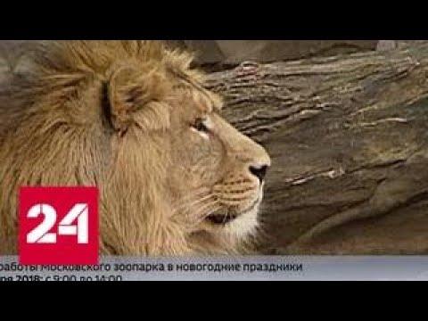 Московский зоопарк 31 декабря дарит скидку на билеты - Россия 24