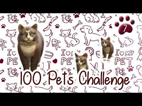 The Sims 4 Indonesia : 100 Pets Challenge - Molly Lahiran~ 🐾7