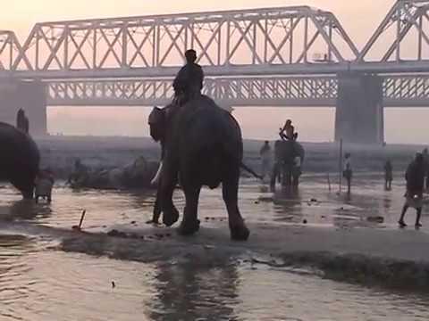 Elefanti in India