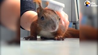 Rescued Squirrel Loves His Mom | The Dodo