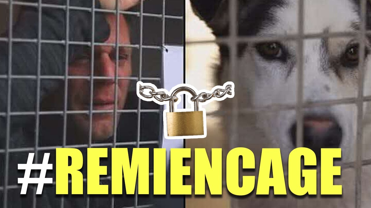 Locked in a cage like a dog for 87 hours, Remi Gaillard, raises more than $215,000.00 for the animal shelter and gets 200 animals adopted.
