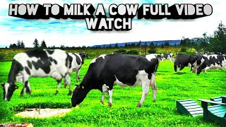 Cow milking full video,How to milk a cow