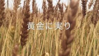 黄金色の麦畑に歌を感じる.