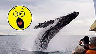 ТОП 10  НАПАДЕНИЙ синих китов НА ЛЮДЕЙ.  Реальные видео 16 декабря 2018
