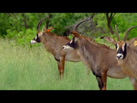 Southern Africa Rare Game Breeders 2017