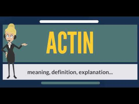 What is ACTIN? ACTIN meaning - ACTING definition - ACTIN explanation - ACTIN pronunciation