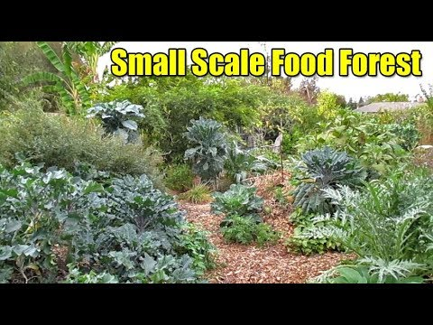 How To Maximize Production On A Small Scale Food Forest Design Food Design Small Gardens on small food gift ideas, 4 foot garden, small food safe boxes, small gardens landscaping, small food forest, small food recipes, small food house, raised bed vegetable garden, small front gardens, small food border, small domino's pizza, small food plants, small food elevator, small food building, small food toys, small food design, small food business, small food games, small food shop, sustainable vegetable garden,