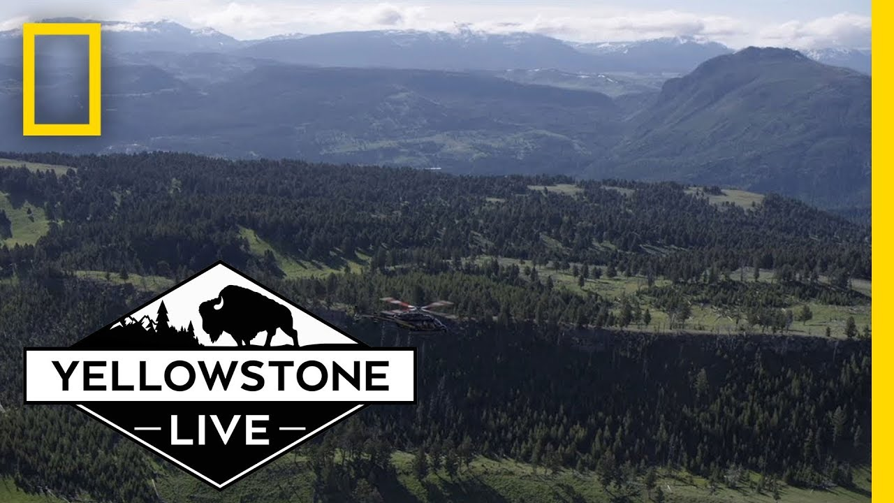 Yellowstone Live: Behind The Scenes | National Geographic