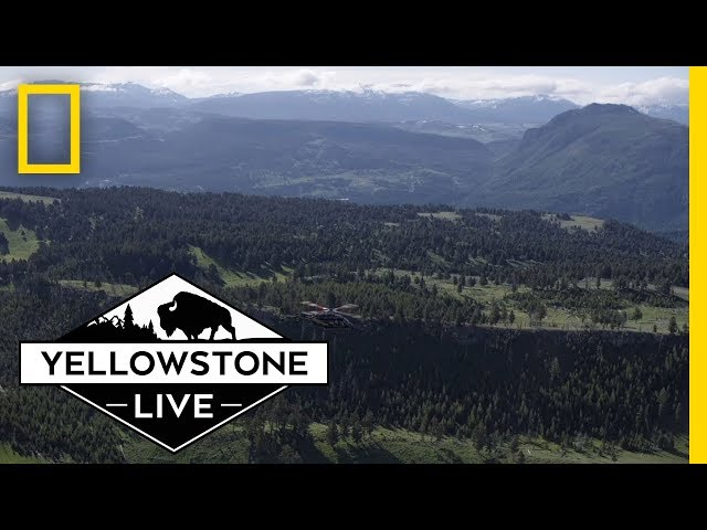 Yellowstone Live: Behind The Scenes   National Geographic
