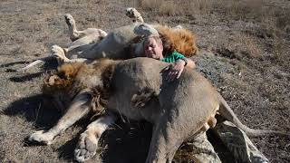 ТОП видео ! Как меня ЗАВАЛИЛИ ЛЬВЫ ! TOP videos !  How the lions knocked me down!!!
