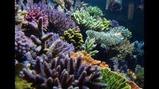 Todos meus aquários ao longo dos meus 20 anos de aquarismo marinho
