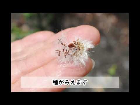 ~自然観察指導員西田さんとゆく~初夏の草花さんぽ