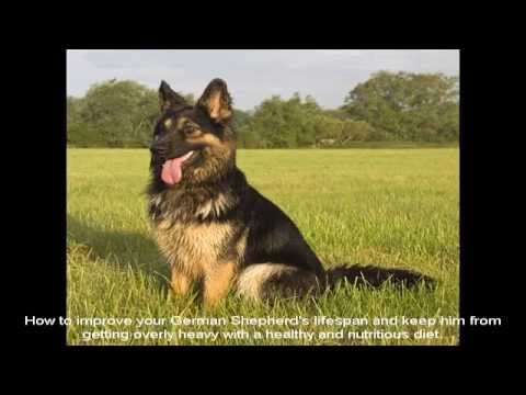 German Shepherd Dogs For Sale Price