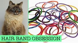 June - Cat loves hairbands