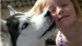 Chó Husky, tìm hiểu về giống chó husky