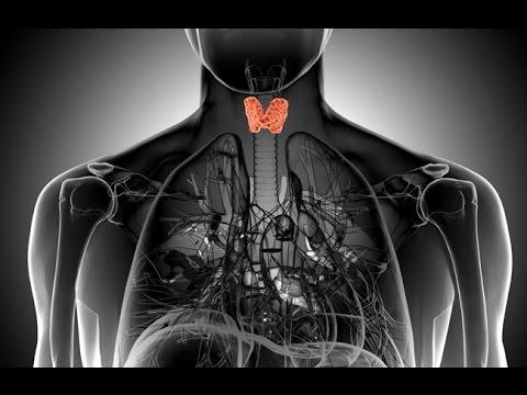 УЗИ нормы щитовидной -