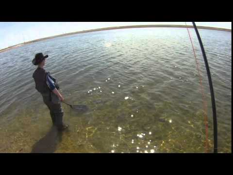 6 pound rainbow trout on a fly rod fishing alsop lake for Wyoming out of state fishing license