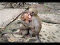 Appetite pity baby monkey need warm up their self after rain stopped their body shaking