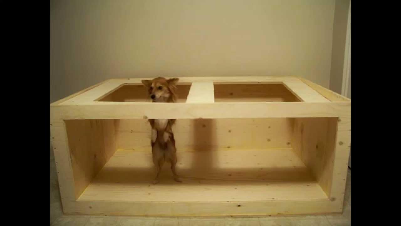 Build A Plywood Aquarium Tutorial