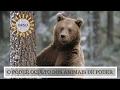 O Poder Oculto do Animal de Poder - Significado do Urso ...