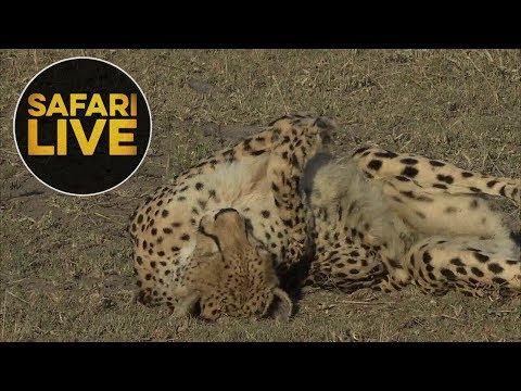 safariLIVE - Sunrise Safari - June, 01. 2018 Part 1