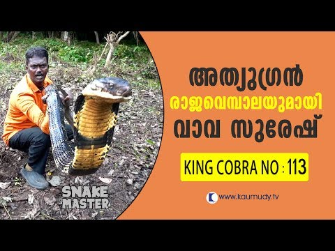 Wow! 13 feet long 113th King Cobra rescued   Vava Suresh   Snake Master   Latest episode