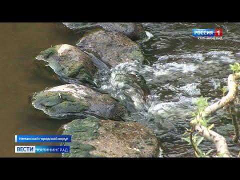 В Калининградской области проведут расчистку русла реки Инструч