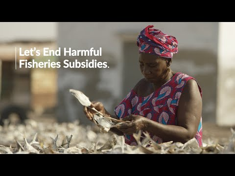 Perspective From A Senegalese Seafood Processor: Ending Harmful Fisheries Subsidies