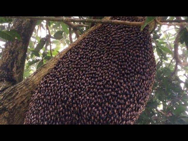 Beehive Makes Mesmerizing Defensive Wave