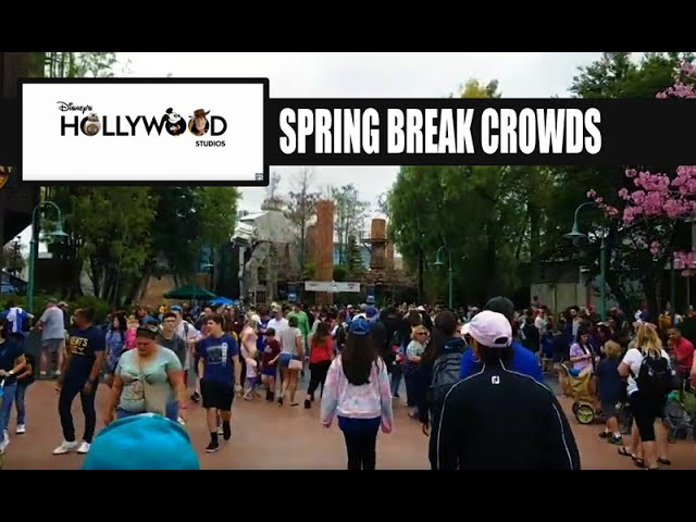 LIVE: Disney's Hollywood Studios Spring Break Crowds - Disney Skyliner Ride