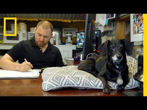 Dog Duty Inspiration | Big Fish, Texas
