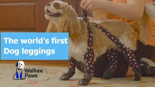Walkee Paws - the world's first dog legging!