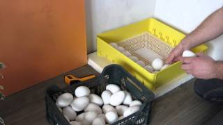 Закладка гусиных яиц в инкубатор argis.(Закладка яиц в инкубатор.Подключиться к партнёрской программе и зарабатывать деньги на Ютубе вы можете..., 2016-03-19T03:42:46.000Z)