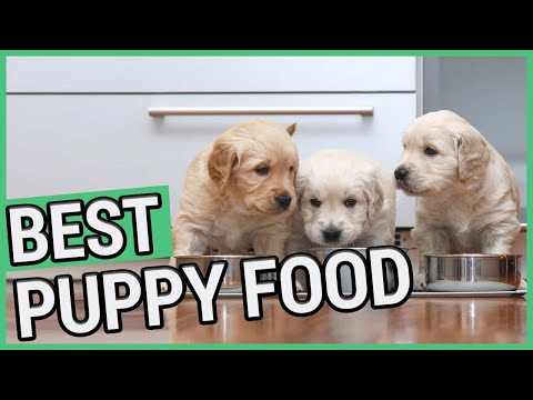 Best Puppy Food | 5 Best Food For Puppies 2020 🐶 ✅