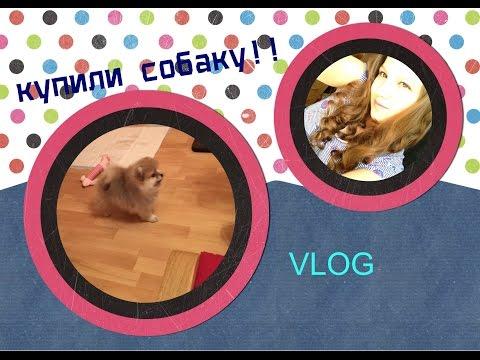 VLOG:(КУПИЛИ СОБАКУ! ШПИЦ:))))/Виктория Крокус