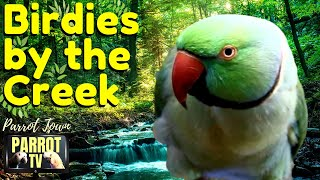 By the Creek Parrot Nature Sou…
