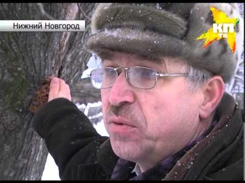 Новые серии барбоскиных здравствуй дедушка мороз