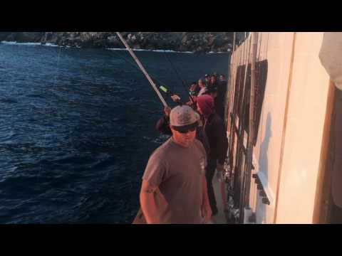 Fortune Sportfishing - Island Seabass