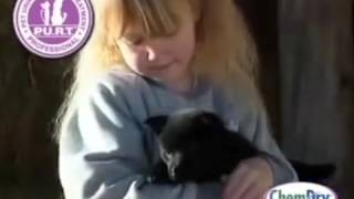 Evcil Hayvan İdrar Kokusu Giderilmesi - Halıdan, Koltuktan Kedi, Köpek İdrar Çiş Kokusu Nasıl Çıkar